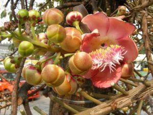 Fiori nel giardino del Grande Palazzo a Ko Rattanakosin.