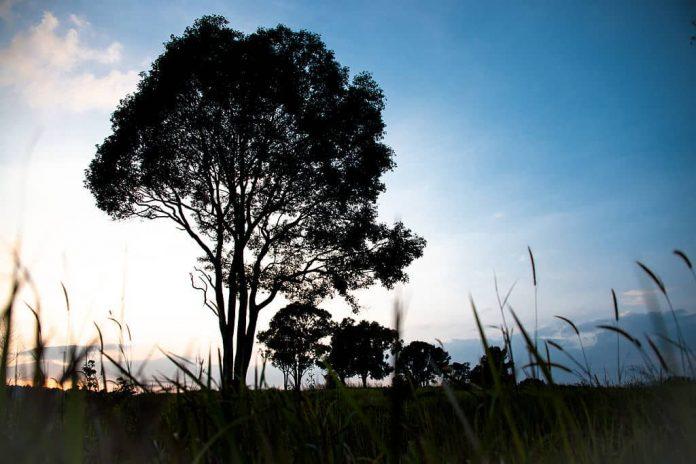 Tramonto al Khao Yai National Park. Foto di Rushen.