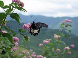 Doi Phukka National Park. Foto di Takeaway.