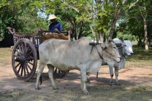Sukhothai Si Chum. Foto di Hartmann Linge.
