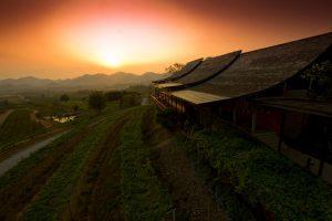 Thailandia: Vino e cantine, possibile? 1