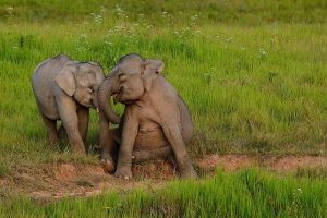 Elefanti a Khao Yai.
