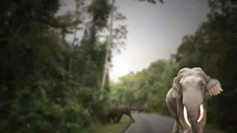 Come non spaventare gli elefanti selvatici a Khao Yai