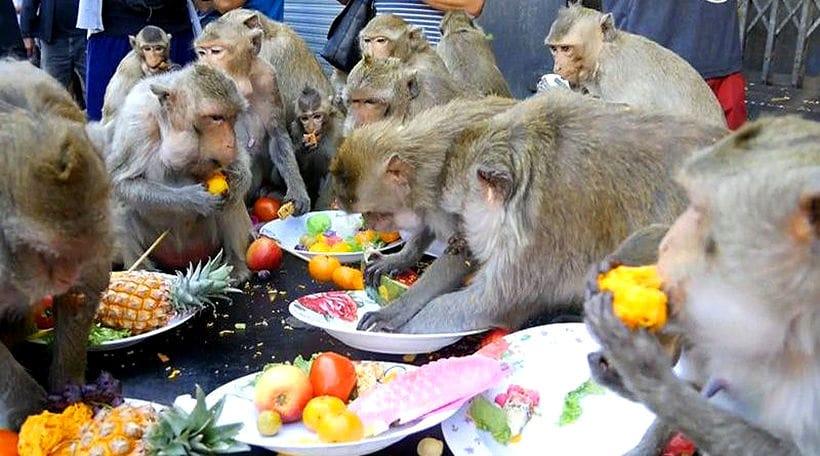 Gin khao! Buffet annuale per le scimmie a Lopburi gallery 2