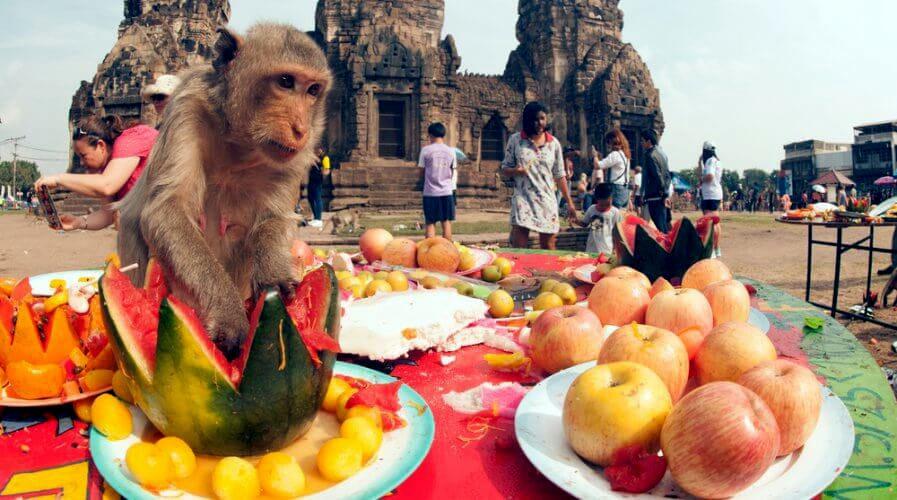 Gin khao! Buffet annuale per le scimmie a Lopburi