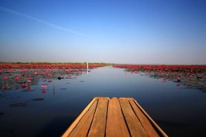Lo spettacolare Lago di Loto Rosso a Udon Thani